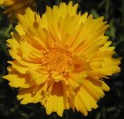 Marny-flower