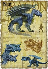 Blue dragon anatomy - Richard Sardinha