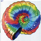 File:Rainbow Shell.png