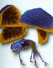File:Swamp bug.png