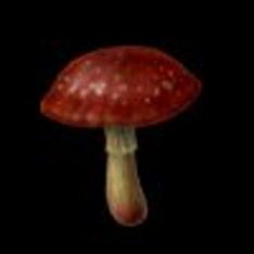 File:Mushroom.jpg
