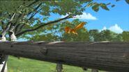 KokoandtheSquirrels16