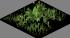 Low Grass04