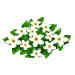 White Freedom Flowers-icon