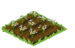 Edelweiss Seedling