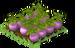 Turnips Fruit