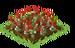 Mistletoe Crop Fruit