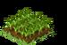 Barley Seedling