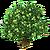 WhiteSapote Tree-icon