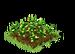 Habitat Peppers Seedling