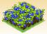 Plot Blueberries