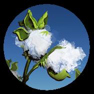 File:Cotton (Civ5).png