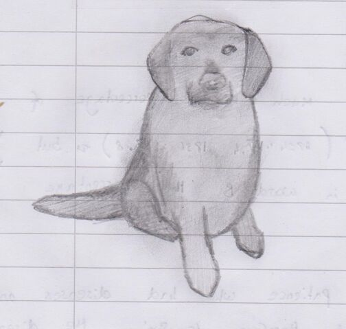 File:A sketch of Willow the dog.jpeg