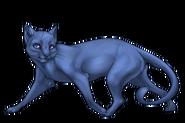 Cat Adult