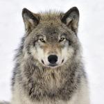 File:Fur.png