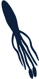 File:Giant Squid!.png