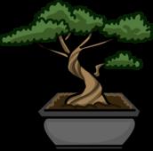Bonsai Tree icon