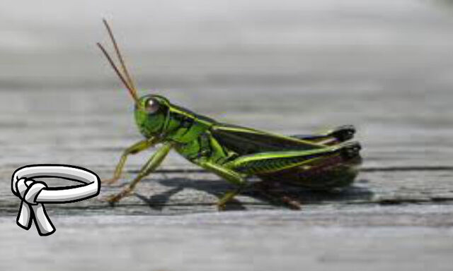 File:Young Grasshopper.jpg