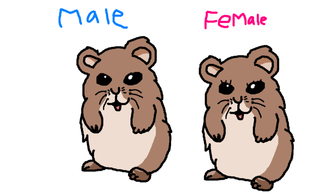 File:Hamsters.PNG