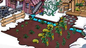 Old Mine Shack Plants