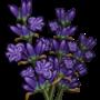 Lavender-icon