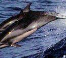 Delfín clímene