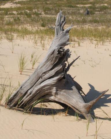 File:Driftwood.jpg