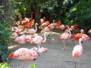 File:969777 flamingo 2.jpg