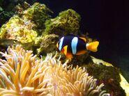 289368 saltwater fish 1