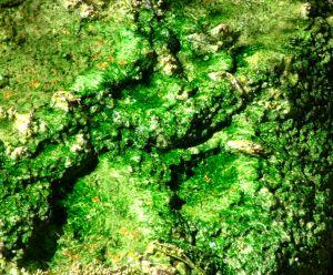 757066 green algae texture