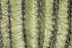 981504 cactus
