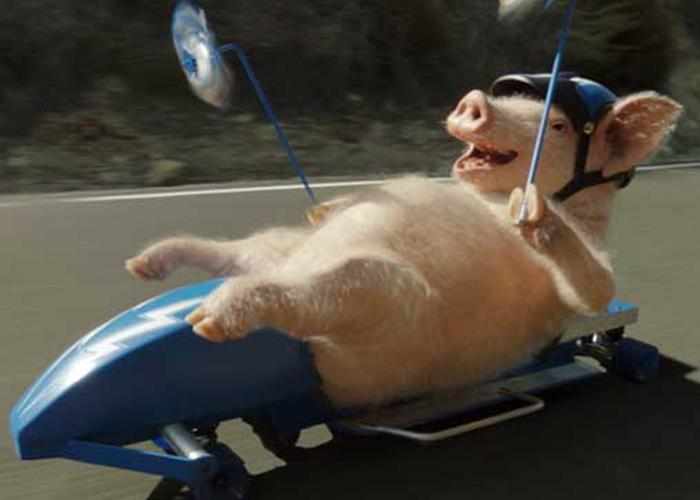 Geico Pig Friday Meme Related Keywords Suggestions Geico Pig