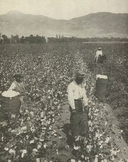 Cotton Slaves-South
