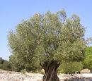 Evola tree