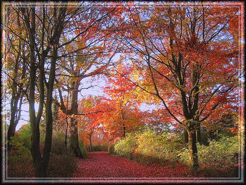 File:Golden autumn2.jpg