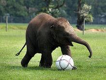 Elephant-440