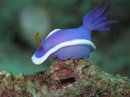 File:Seaslug.jpg