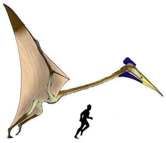 File:Quetzalcoatlus2wj2.jpg