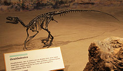 File:250px-Ornitholestes mount at Royal Tyrrell Museum.jpg