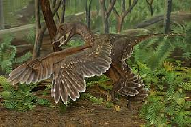 File:Sinornithosaurus.png