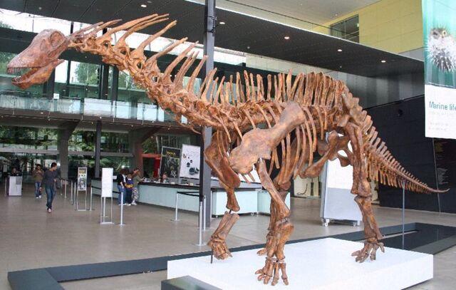 File:800px-Amargasaurus1 Melb Museum email.jpg