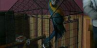 John (parrot)