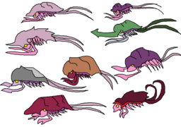 Kullspecies