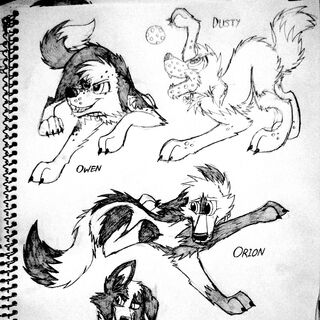Owen, Dusty, Orion and Jayne sketches, mainly for practice (used pose refs from Streetfair since I hadn't drawn ferals for a while).