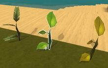 Creativerse tree saplings1