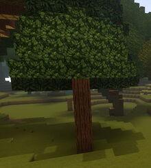 Creativerse Cragwood Tree self grown0