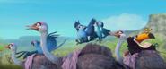 Rio2-riding-rheas