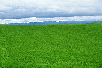 File:Picture-oregon-fields-clouds-and-mountains.jpg