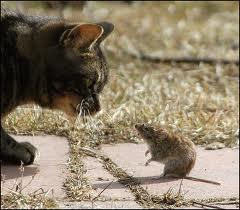 File:Predator&Prey.jpg