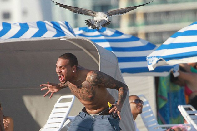 File:Chris-brown-seagull-attack jpg 630x427 q85.jpg